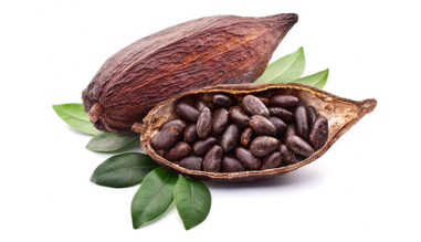 Gamme cacao